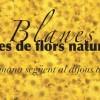 Alfombras de flores, Blanes