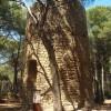 Torre Mora