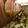 Museo Darder