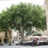 Árbol de la Libertad